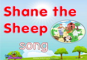 Shane the Sheep Song